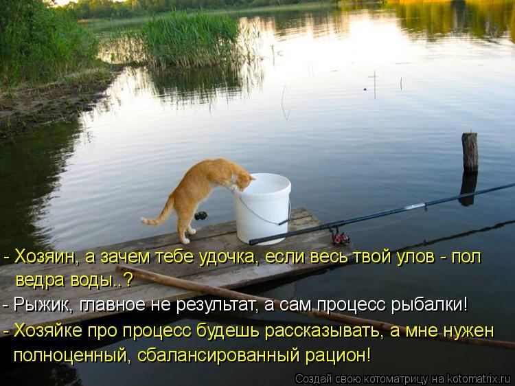Котоматрица: - Хозяин, а зачем тебе удочка, если весь твой улов - пол ведра воды..? - Рыжик, главное не результат, а сам процесс рыбалки! - Хозяйке про процесс