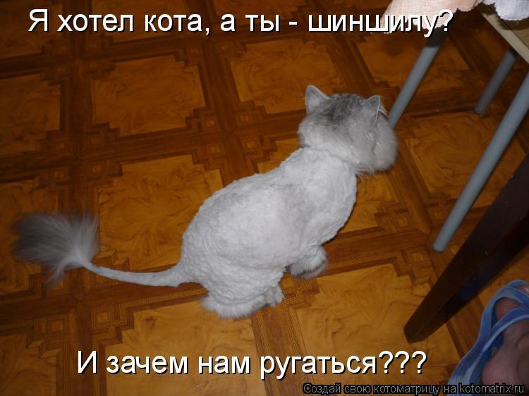 Котоматрица: Я хотел кота, а ты - шиншилу? И зачем нам ругаться???