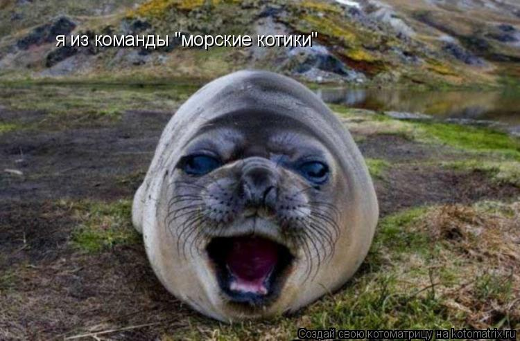 "Котоматрица: я из команды ""морские котики"""