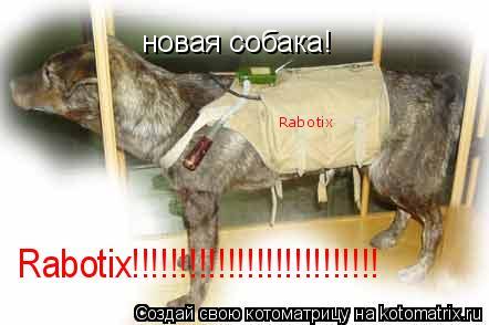 Котоматрица: новая собака! Rabotix!!!!!!!!!!!!!!!!!!!!!!!!!! Rabotix