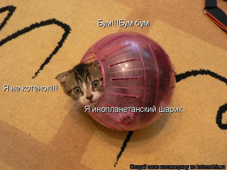 Котоматрица: Бум!!!Бум бум Я не котёнок!!! Я инопланетанский шарик