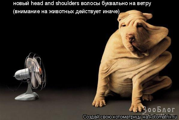 Котоматрица: новый head and shoulders волосы буквально на ветру (внимание на животных действует иначе)
