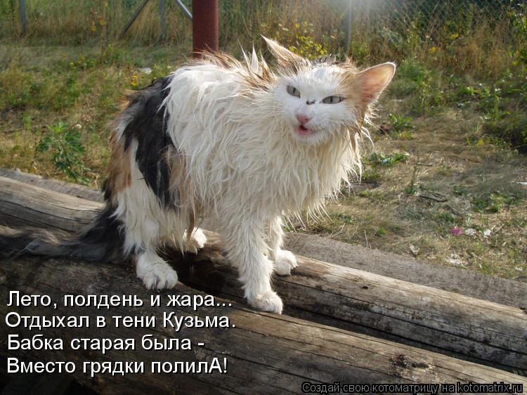 Котоматрица: Лето, полдень и жара... Отдыхал в тени Кузьма. Бабка старая была - Вместо грядки полилА!