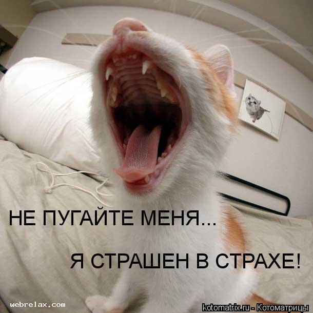 Котоматрица: НЕ ПУГАЙТЕ МЕНЯ... Я СТРАШЕН В СТРАХЕ!