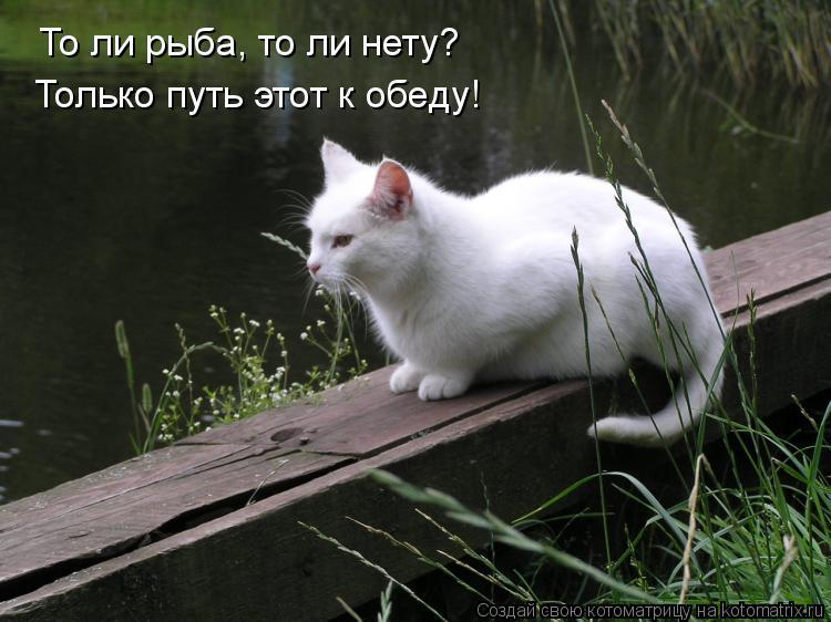 Котоматрица: То ли рыба, то ли нету? Только путь этот к обеду!