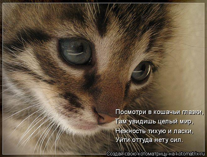 Котоматрица: Посмотри в кошачьи глазки, Там увидишь целый мир, Нежность тихую и ласки, Уйти оттуда нету сил.