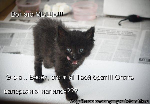 Котоматрица: Вот это МЫШЬ!!! Э-э-э... Васёк, это ж я! Твой брат!!! Опять  валерьянки напился???