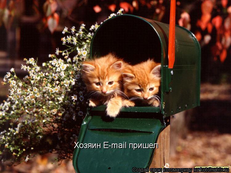 Котоматрица: Хозяин E-mail пришел