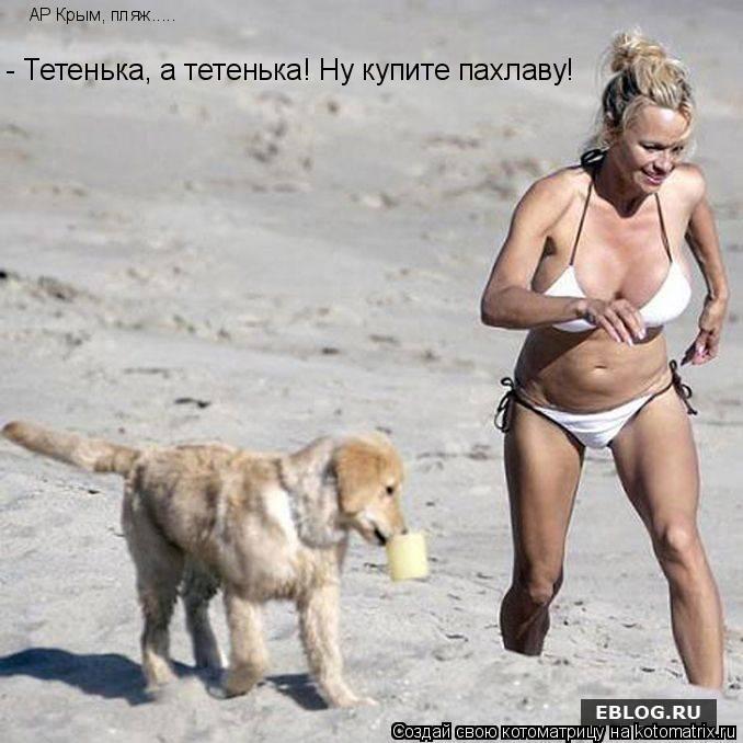 Котоматрица: АР Крым, пляж..... - Тетенька, а тетенька! Ну купите пахлаву!