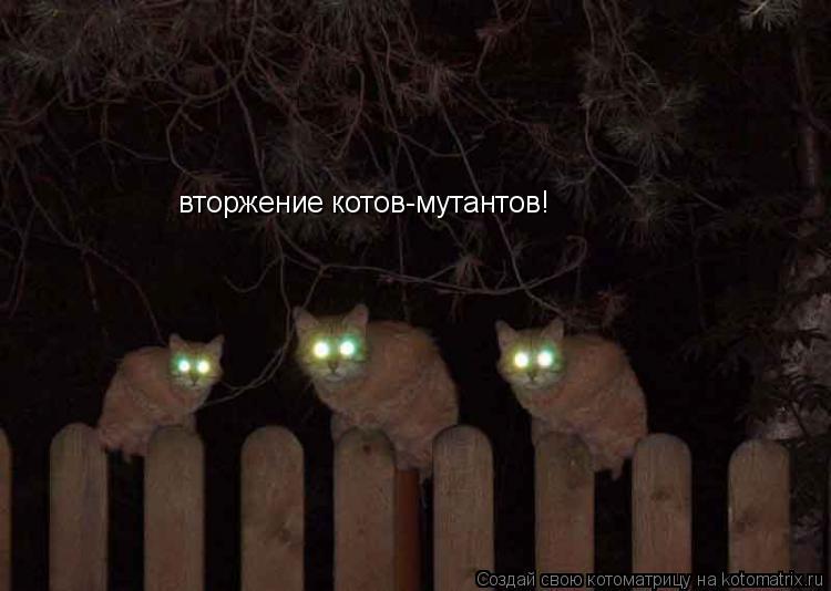 Котоматрица: вторжение котов-мутантов!