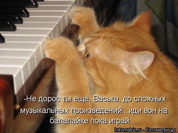 Котоматрица: -Не дорос ты ещё, Васька, до сложных музыкальных произведений...иди вон на балалайке пока играй....