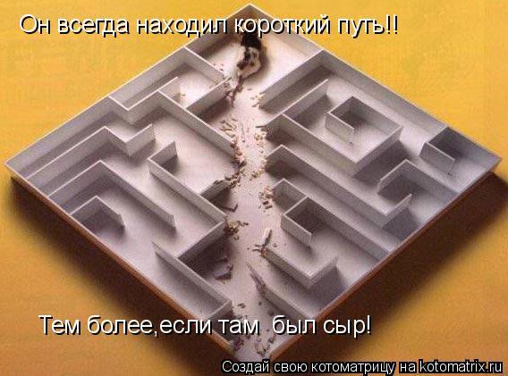 Котоматрица: Он всегда находил короткий путь!! Тем более,если там  был сыр!