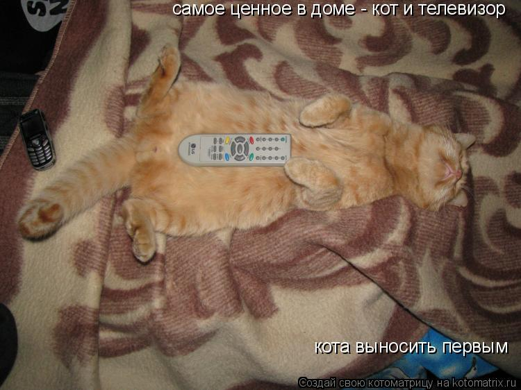 Котоматрица: самое ценное в доме - кот и телевизор кота выносить первым