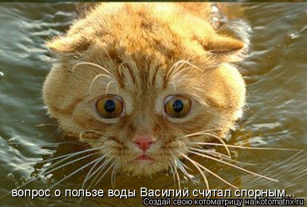 Котоматрица: вопрос о пользе воды Василий считал спорным...