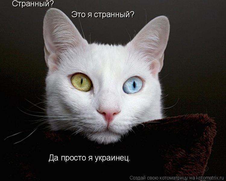 Котоматрица: Странный? Это я странный? Да просто я украинец.