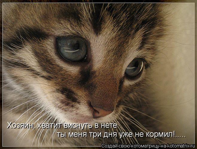 Котоматрица: Хозяин, хватит виснуть в нете ты меня три дня уже не кормил!.....