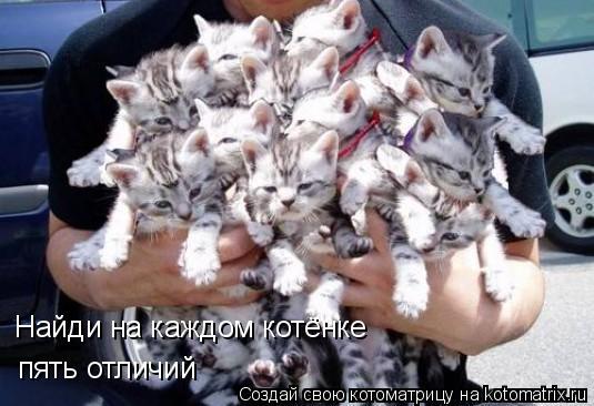 Котоматрица: Найди на каждом котёнке пять отличий
