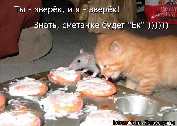 """Котоматрица: Ты - зверёк, и я - зверёк!  Знать, сметанке будет """"Ек"""" ))))))"""