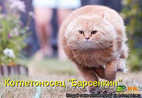 "Котоматрица: Котлетоносец ""Барсенкин"""