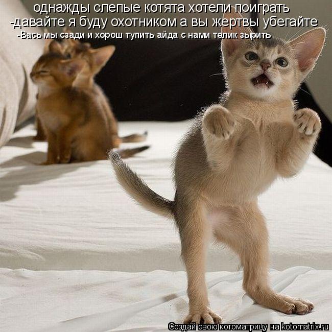 Котоматрица: однажды слепые котята хотели поиграть -давайте я буду охотником а вы жертвы убегайте -Вась мы сзади и хорош тупить айда с нами телик зырить