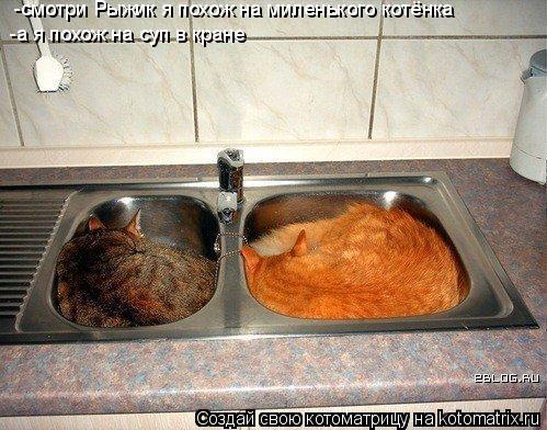Котоматрица: -смотри Рыжик я похож на миленького котёнка -а я похож на суп в кране