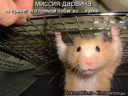 Котоматрица: миссия дарвина ээ привет это прямой побег из.....кухни