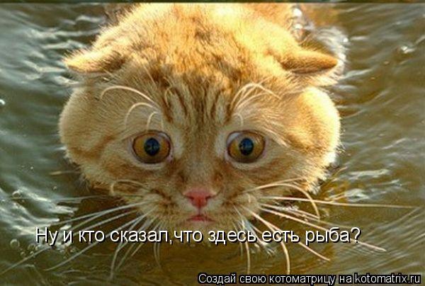 Котоматрица: Ну и кто сказал,что здесь есть рыба?