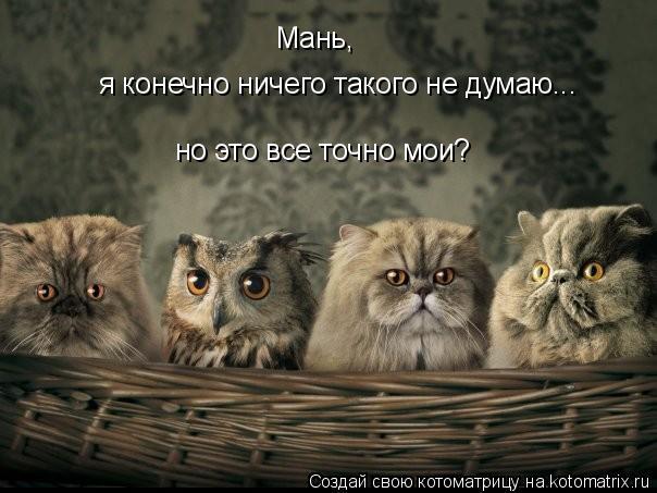 Котоматрица: Мань,  я конечно ничего такого не думаю...  но это все точно мои?
