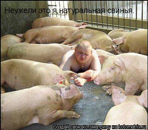 Котоматрица: Неужели это я,натуральная свинья.