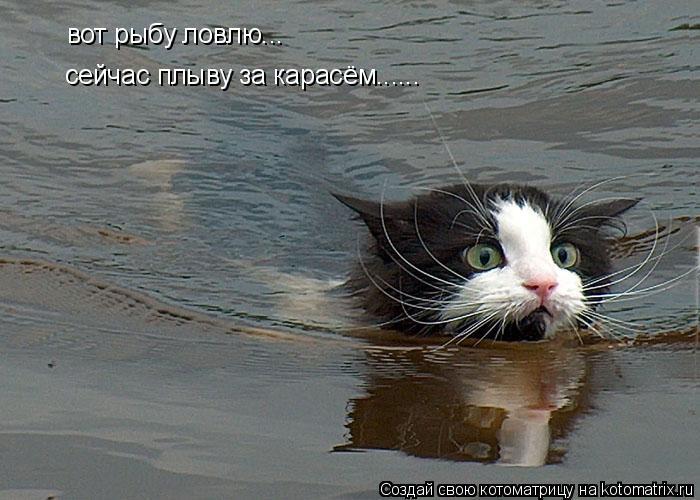 Котоматрица: вот рыбу ловлю... сейчас плыву за карасём......