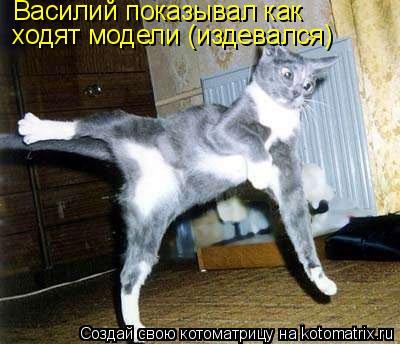 Котоматрица: Василий показывал как ходят модели (издевался)