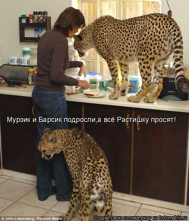 Котоматрица: Мурзик и Барсик подросли,а всё Растишку просят!