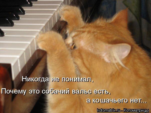 Котоматрица: Почему это собачий вальс есть,  Никогда не понимал, а кошачьего нет...