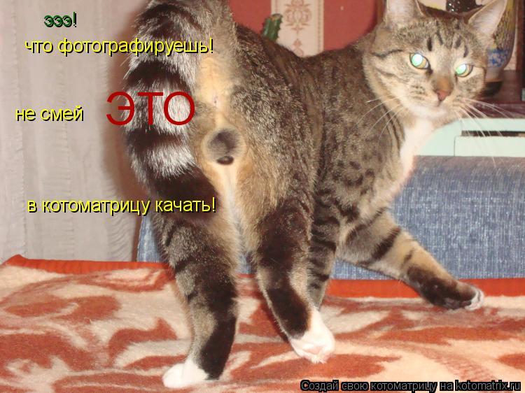 Котоматрица: эээ! что фотографируешь! не смей                   ЭТО          в котоматрицу качать!
