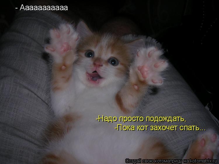 Котоматрица: - Ааааааааааа -Надо просто подождать, -Надо просто подождать, -Пока кот захочет спать...