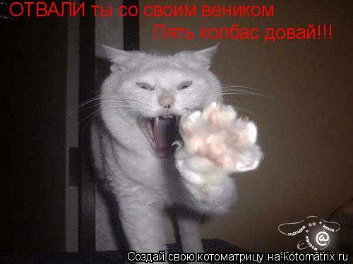 Котоматрица: ОТВАЛИ ты со своим веником Пять колбас довай!!!