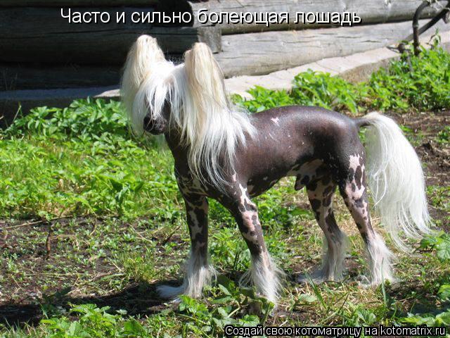 Котоматрица: Часто и сильно болеющая лошадь