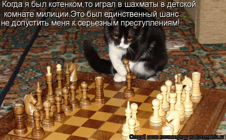 Котоматрица: Когда я был котенком,то играл в шахматы в детской комнате милиции.Это был единственный шанс   не допустить меня к серьезным преступлениям!