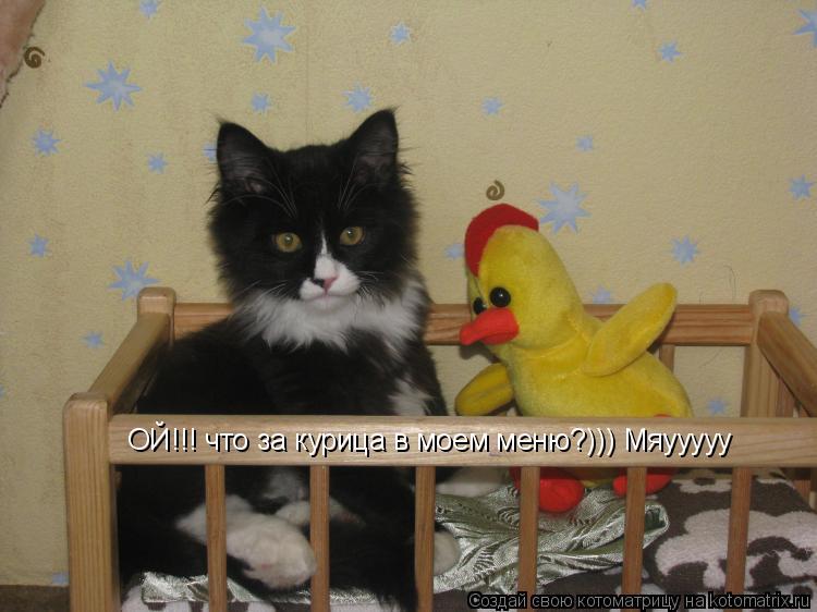 Котоматрица: ОЙ!!! что за курица в моем меню?))) Мяууууу