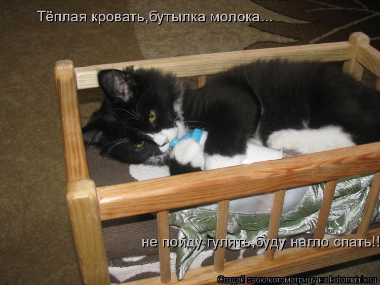 Котоматрица: Тёплая кровать,бутылка молока...  не пойду гулять,буду нагло спать!!