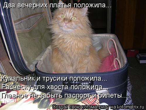 Котоматрица: Два вечерних платья положила... Купальник и трусики положила... Расческу для хвоста положила... Главное не забыть паспорт и билеты...
