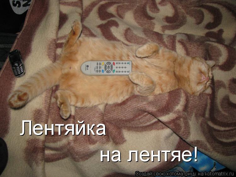 Котоматрица: Лентяйка  на лентяе!