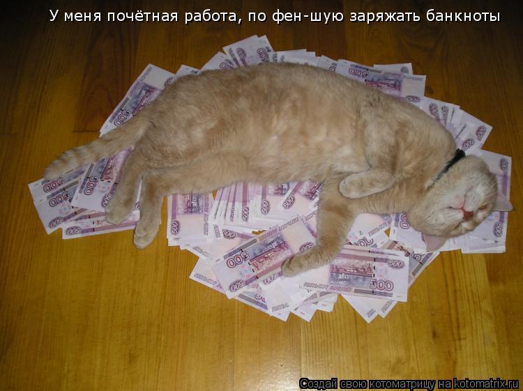 Котоматрица: У меня почётная работа, по фен-шую заряжать банкноты
