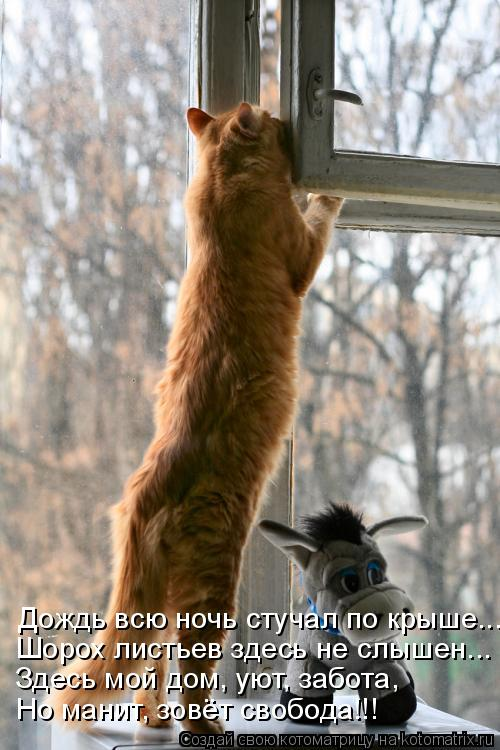 Котоматрица: Но манит, зовёт свобода!!! Здесь мой дом, уют, забота, Шорох листьев здесь не слышен... Дождь всю ночь стучал по крыше...