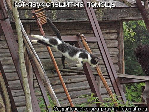 Котоматрица: Кот-паук спешит на помощь