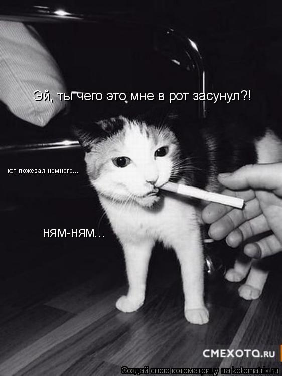 Котоматрица: Эй, ты чего это мне в рот засунул?! кот пожевал немного... ням-ням...