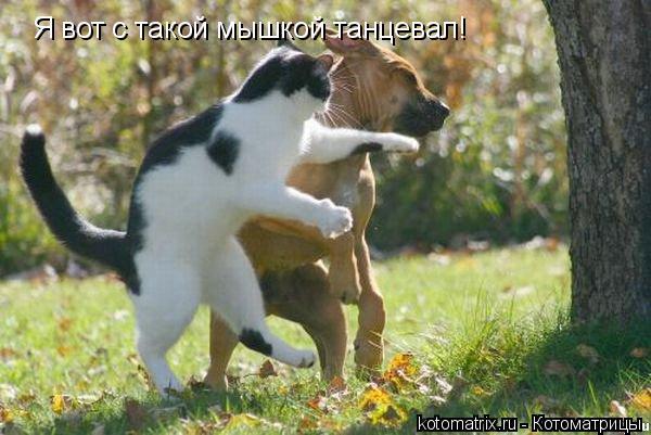 Котоматрица: Я вот с такой мышкой танцевал!