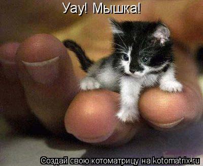 Котоматрица: Уау! Мышка!
