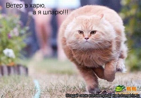 Котоматрица: Ветер в харю,  а я шпарю!!!