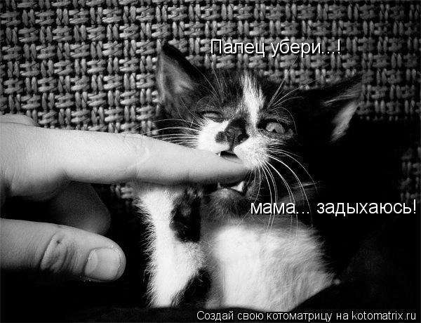 Котоматрица: Палец убери...! мама... задыхаюсь!